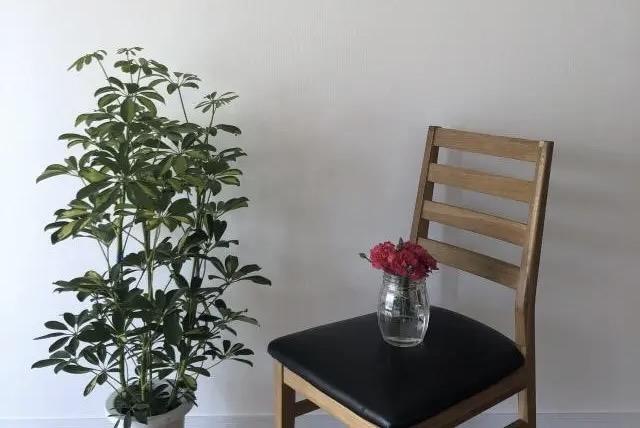 観葉植物と椅子と花瓶